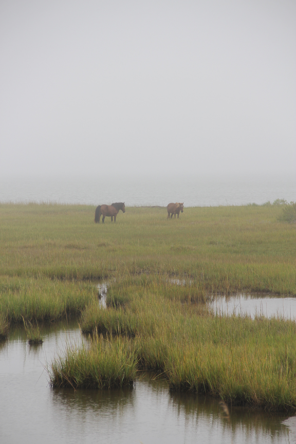 Ponies in the Mist - Assateague Island, 2016