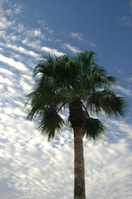 Palm sunrise, 2007