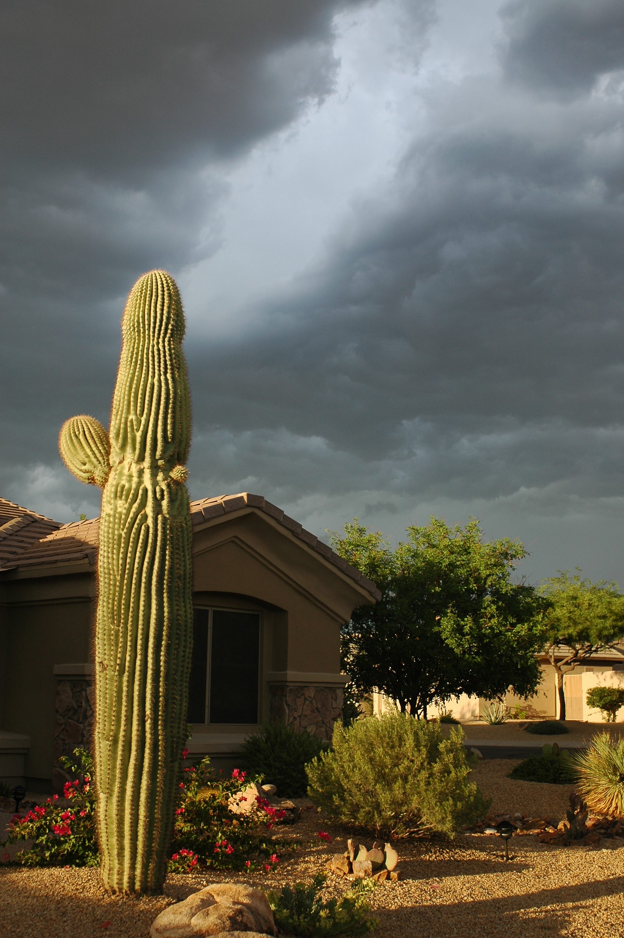 Joe Dobrow photo of an illuminated cactus