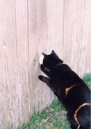 Joe Dobrow photo of Amalfi the cat at fence