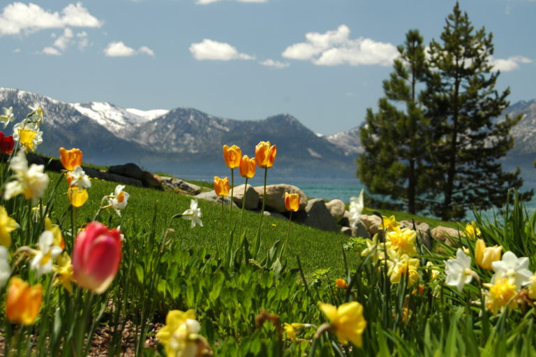 Joe Dobrow photo of flowers at Lake Tahoe