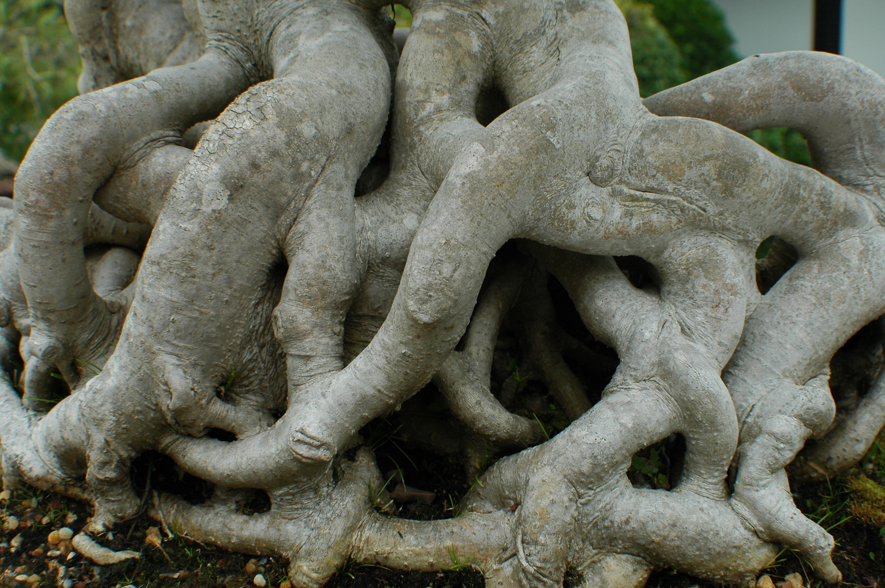 Joe Dobrow photo of twisted tree roots