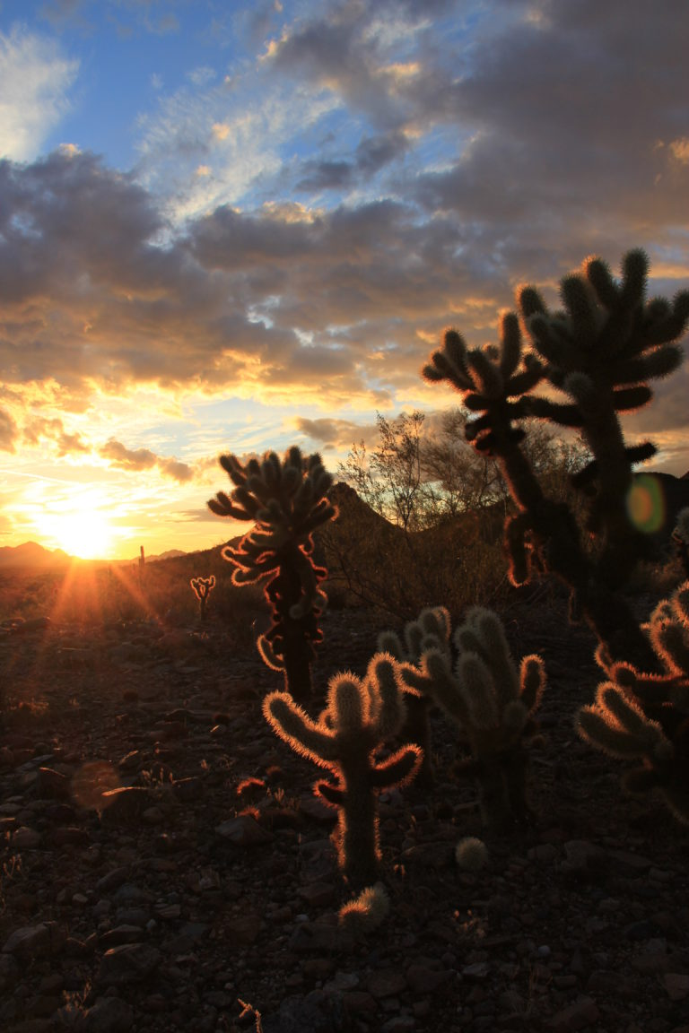 Joe Dobrow photo of cholla at sunset