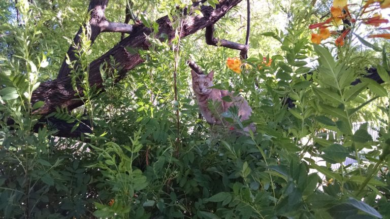 Joe Dobrow photo of Cona the cat in a tree