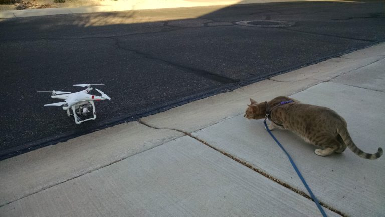 Joe Dobrow photo of a cat and a drone