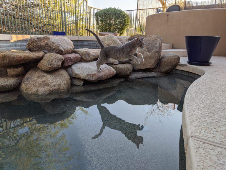 Joe Dobrow photo of Brina the cat jumping across a pool