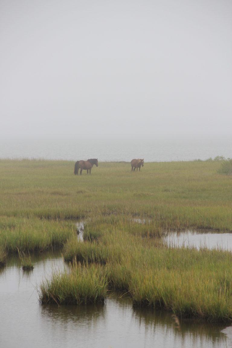 Joe Dobrow photo of ponies at Assateague Island