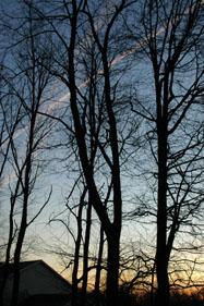 Joe Dobrow photo of a sunrise and bare trees